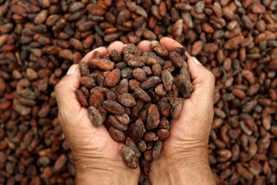 Kakao Seremonileri